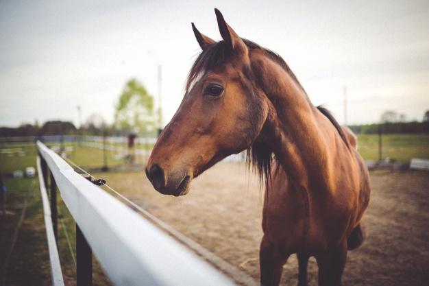 Importancia del caballo